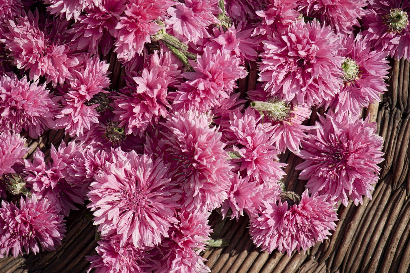 Blüten aus biologischem Anbau - Kornblumen Rot
