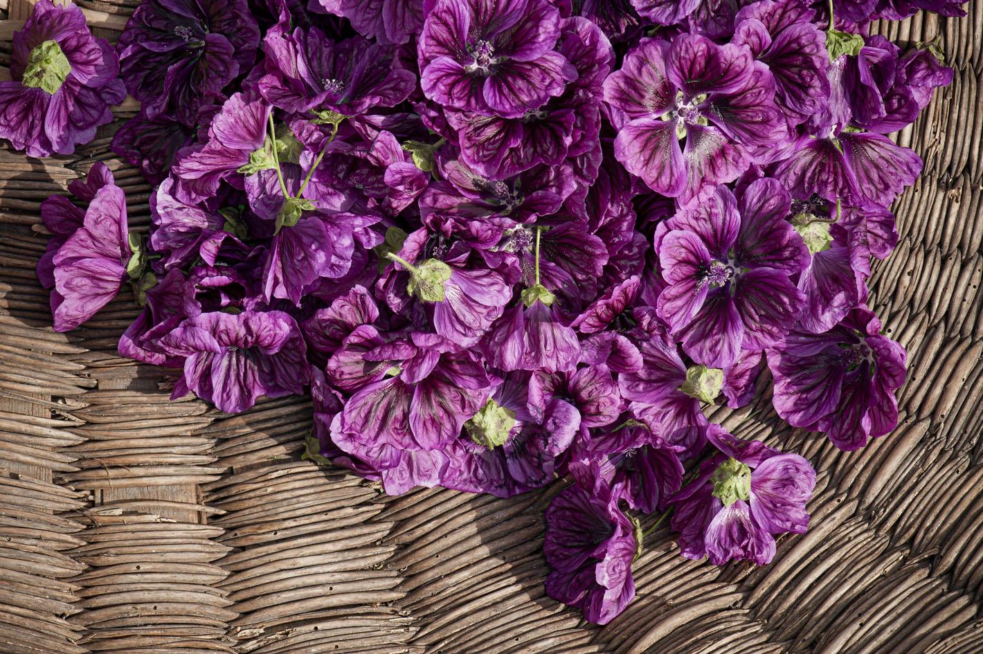 Blüten aus biologischem Anbau - Malve